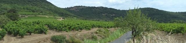 Landschaft und Weinstöcke um Cabrières